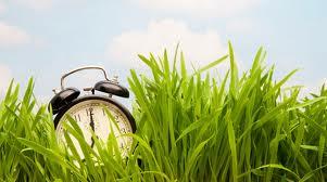 clock grass